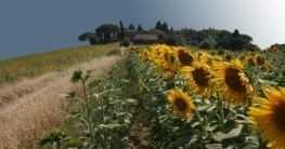 Landschaft bei Borgo San Lorenzo